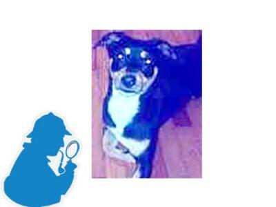 Χάθηκε σκύλος στην Βαλαωρίτου Τρικάλων όνομα Leo. Σκύλος- Τρίκαλα